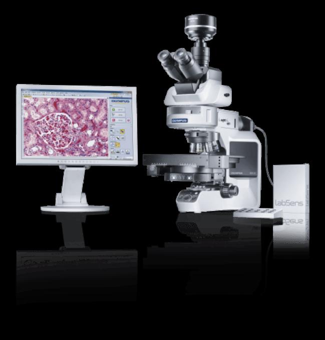 Microscope OLYMPUS BX43