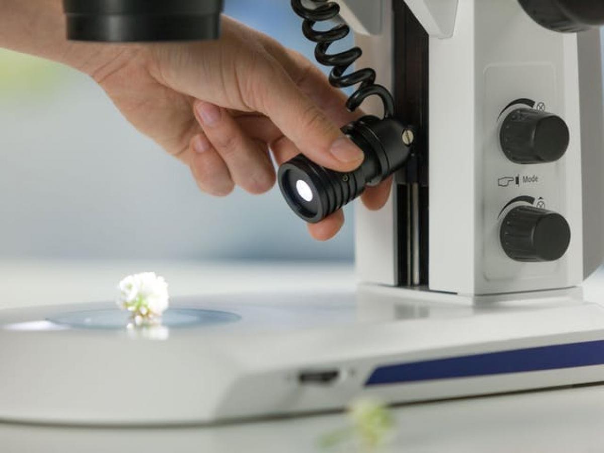 Stéréomicroscope Stemi 305 -3