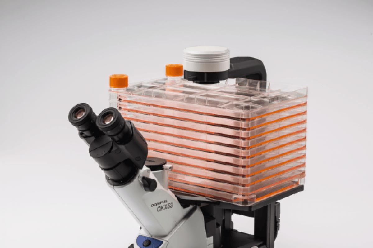Microscope OLYMPUS CKX53 -3