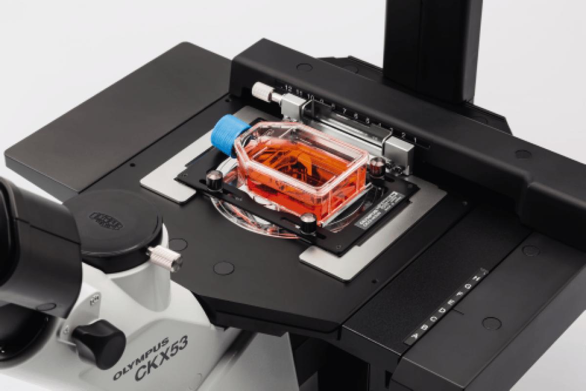 Microscope OLYMPUS CKX53 -6
