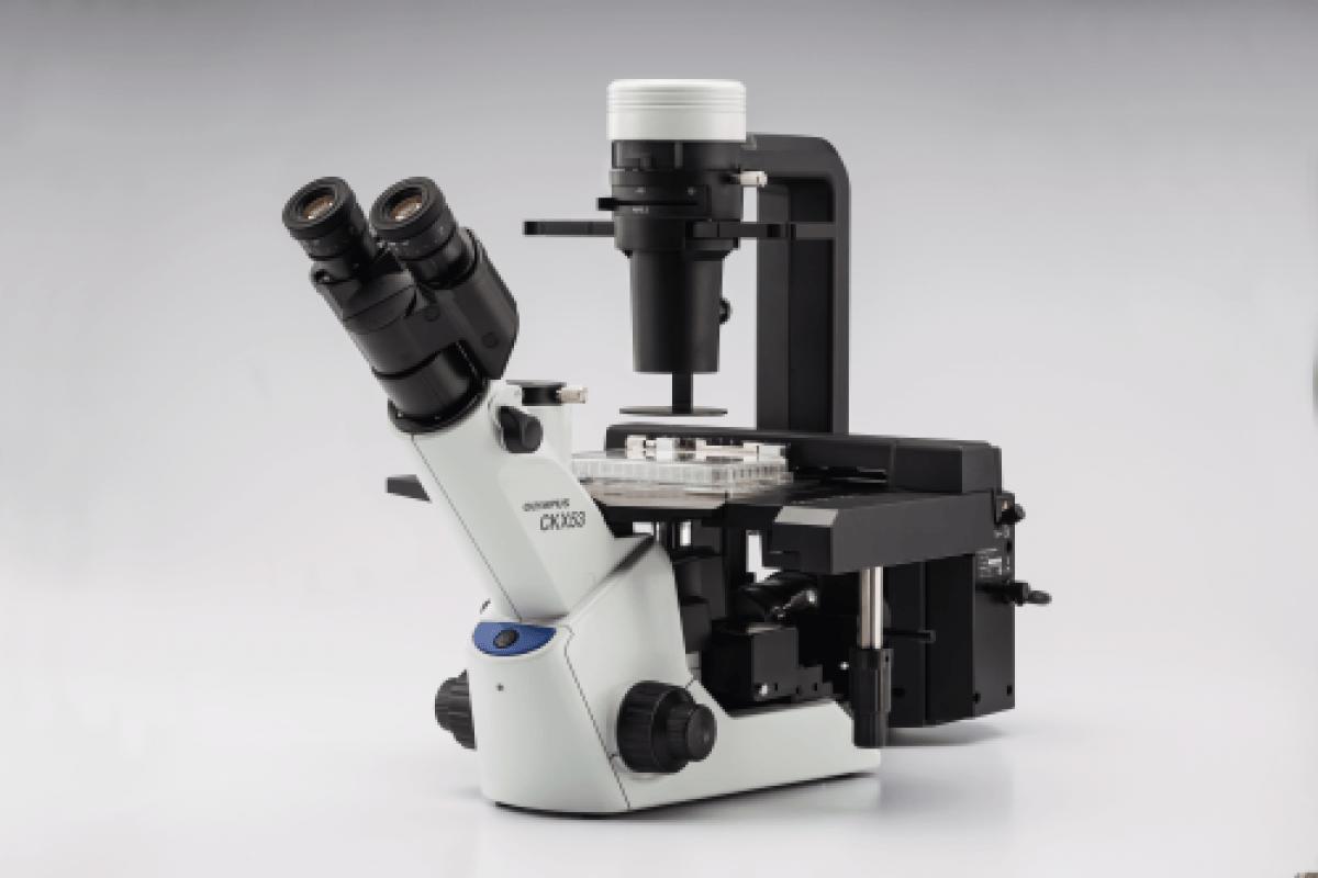 Microscope OLYMPUS CKX53 -2
